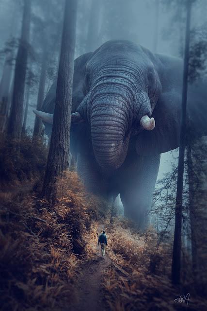 rafy a 后期合成视频 大象特效图片处理教程 收集整理 第1张