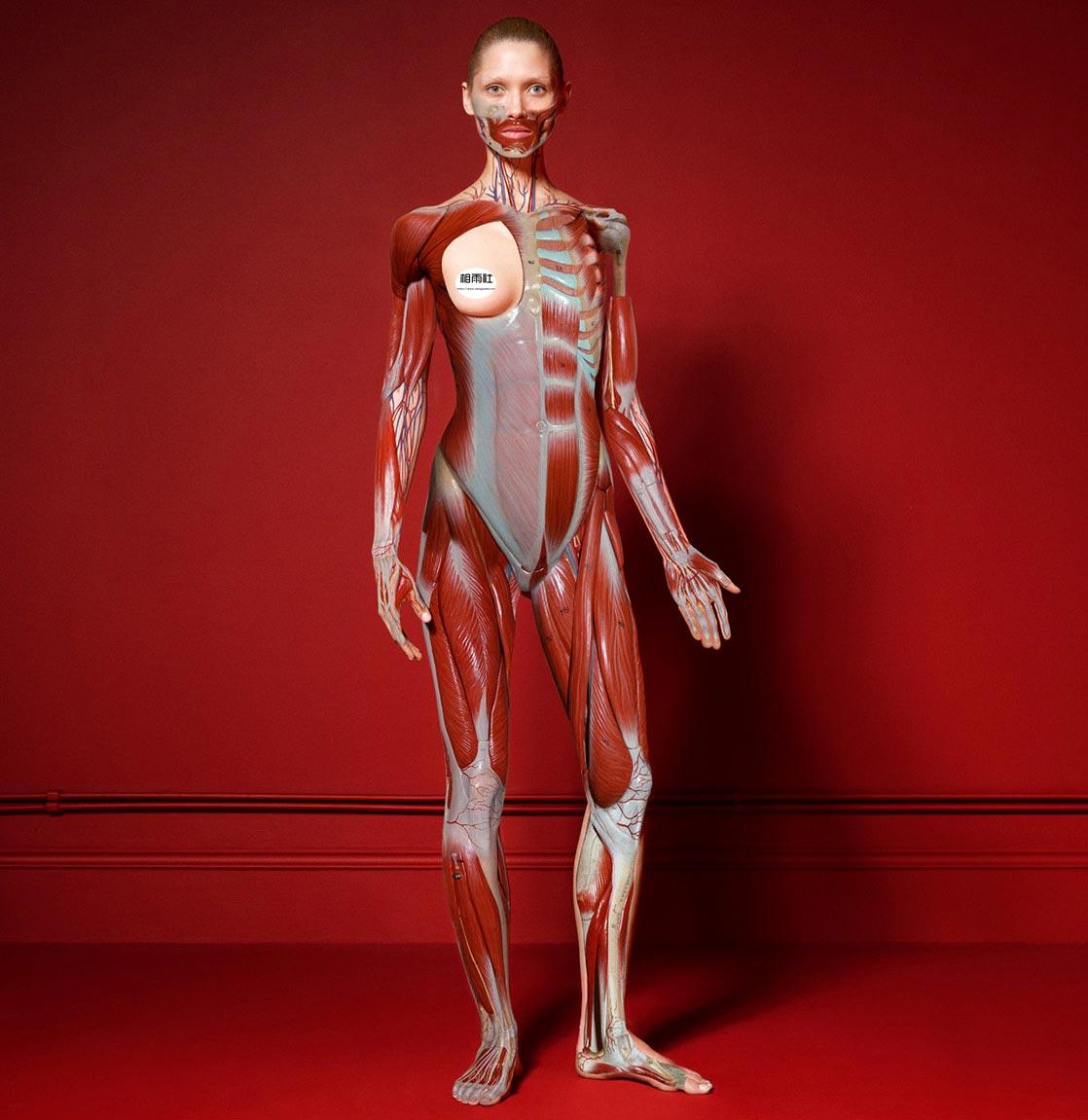 Antidote 杂志 red room的超现实主义大片 时尚图库 第4张